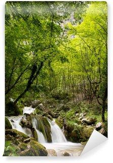 Fototapeta Winylowa Las z małym wodospadem