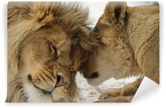 Vinylová Fototapeta Lásky Secret. Lev a lionness (Panthera leo)