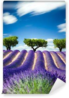 Vinylová Fototapeta Lavande Provence Francie / levandule pole v Provence, Francie
