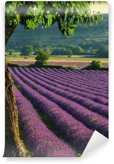 Vinylová Fototapeta Lavender # 4