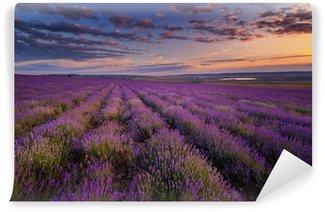 Vinylová Fototapeta Lavender pole na západ slunce