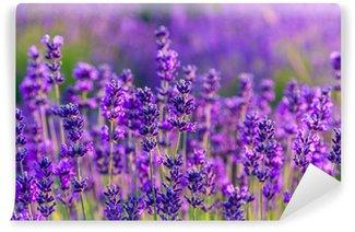 Vinylová Fototapeta Lavender pole v Tihany, Maďarsko