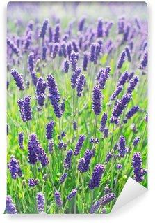 Fototapeta Vinylowa Lawenda kwiaty kwitnące w Polu