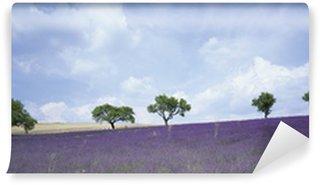 Fototapeta Winylowa Lawendowego pola, Provence, Francja