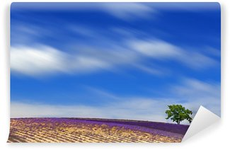 Fototapeta Winylowa Lawendowego pola