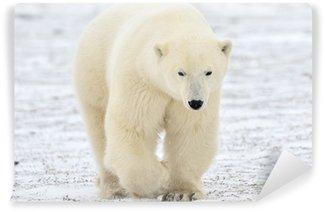 Vinylová Fototapeta Lední medvěd chůzi na tundře.