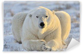 Vinylová Fototapeta Lední medvěd ležící v tundře.
