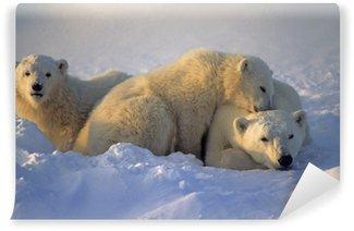 Vinylová Fototapeta Lední medvěd s ní mláďata