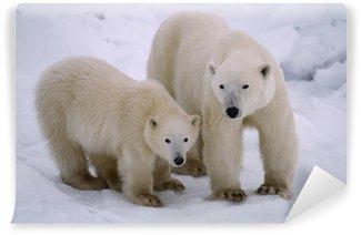 Vinylová Fototapeta Lední medvěd se její mládě roku. Canadian Arctic