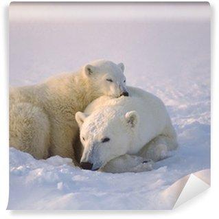 Vinylová Fototapeta Lední medvěd se její mládě