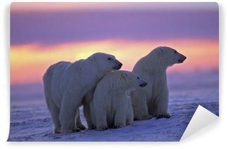 Vinylová Fototapeta Lední medvěd se svými mláďaty v kanadské arktické západu slunce