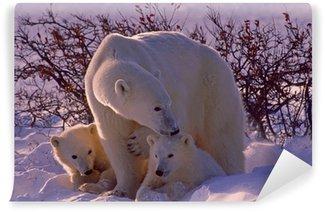 Vinylová Fototapeta Lední medvědi v Arktidě Kanaďana