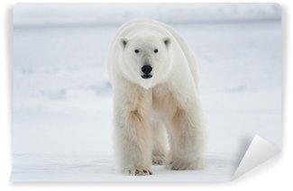 Vinylová Fototapeta Ledový medvěd