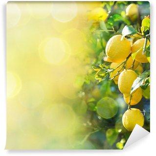 Vinylová Fototapeta Lemon pozadí