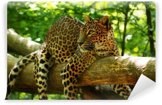 Vinylová Fototapeta Leopard 1