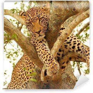 Vinylová Fototapeta Leopard na stromě v Sabi Sands rezervy