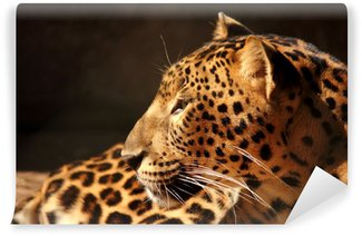 Vinylová Fototapeta Leopard panter pohledu na stromě