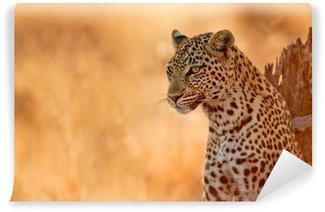 Vinylová Fototapeta Leopard při západu slunce