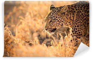 Vinylová Fototapeta Leopard Procházky při západu slunce