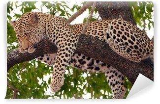 Vinylová Fototapeta Leopard spí na stromě