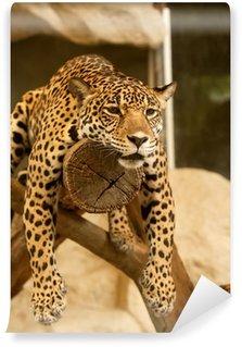 Vinylová Fototapeta Leopard (Tiger)