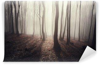 Vinylová Fototapeta Les se slunečními paprsky prosvítající mezi stromy