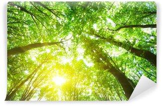 Vinylová Fototapeta Lesní stromy