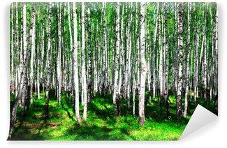 Vinylová Fototapeta Letní březového lesa