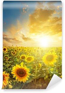 Vinylová Fototapeta Letní krajina: krása západ slunce nad slunečnice pole
