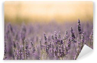 Vinylová Fototapeta Letní louka s květinou. Lavender.