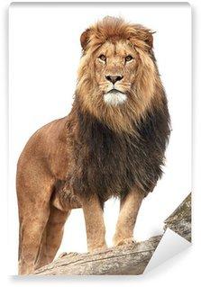 Vinylová Fototapeta Lev (Panthera leo)
