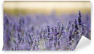 Vinylová Fototapeta Levandule květ pole. Zavřít. Francie.