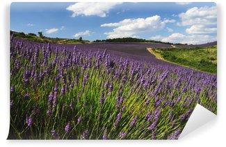 Vinylová Fototapeta Levandulová pole. Provence, Francie
