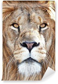 Fototapeta Winylowa Lew (Panthera leo)