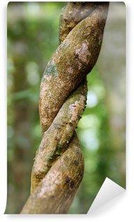 Fototapeta Winylowa Liany wijące dżungli.
