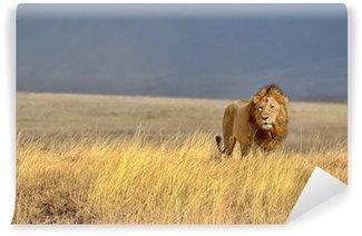 Vinylová Fototapeta Lonely Lion