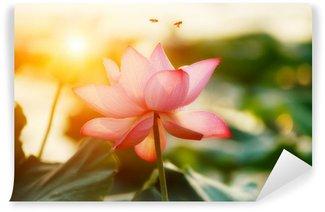 Vinylová Fototapeta Lotosový květ květ