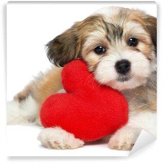 Vinylová Fototapeta Lover Valentine Havanský psík štěně s červeným srdcem