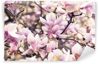Fototapeta Vinylowa Magnolia