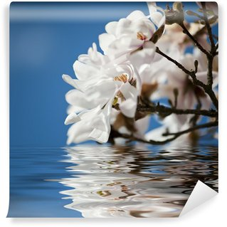 Vinylová Fototapeta Magnólie květiny ve vodě