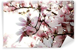 Vinylová Fototapeta Magnolie strom