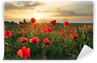 Vinylová Fototapeta Mák polní květiny na slunce