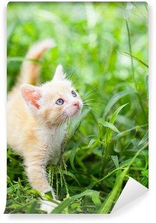 Vinylová Fototapeta Malá červená kočka