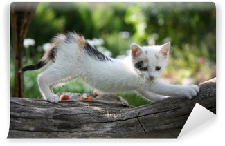 Vinylová Fototapeta Malé bílé kotě poškrábání větev stromu