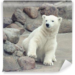 Vinylová Fototapeta Malý lední medvěd