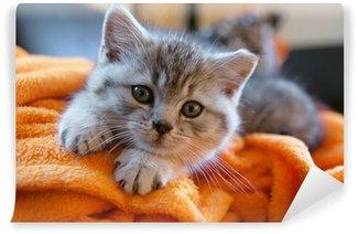 Fototapeta Winylowa Mały szary kot leżący na pomarańczowym kocem na kanapie