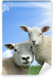 Vinylová Fototapeta Matka ovce a její jehněčí na jaře