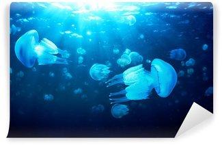 Vinylová Fototapeta Medúzy plovoucí v hluboké modré vody, Černé moře