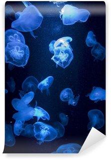 Vinylová Fototapeta Medúzy v akváriu vykazují s modrými světly