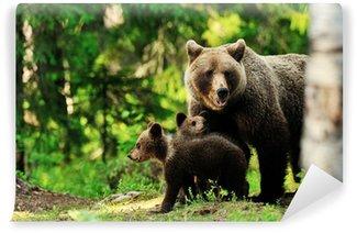 Vinylová Fototapeta Medvěd hnědý rodina v lese